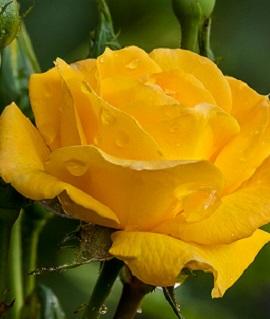 Желтый Остров