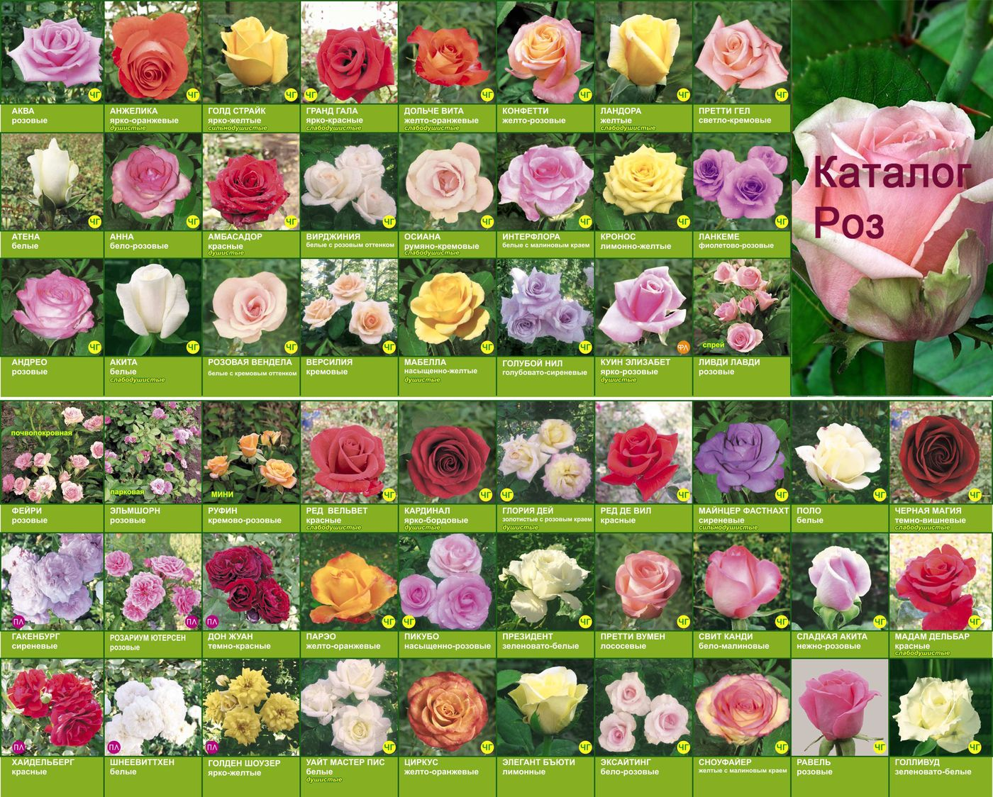 остатки своей цветы срезанные список по алфавиту с фото самом